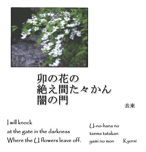 Kyorai - U Flowers
