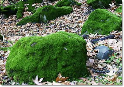 Moss covered rocks 2
