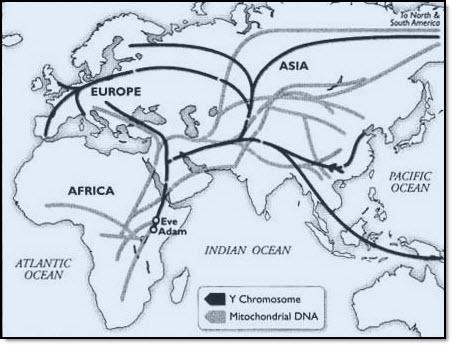 Y chromosome map