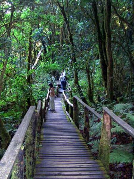 Doi inthanon trail