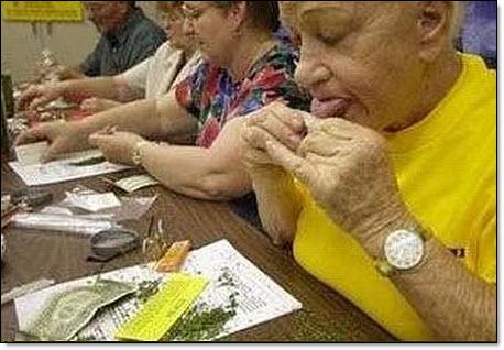 Marijuana use by seniors 02