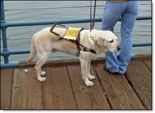 Gay guide dog