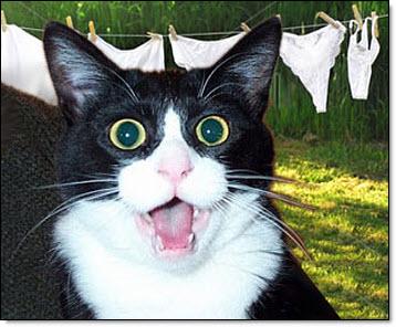 Oscar, the cat burglar