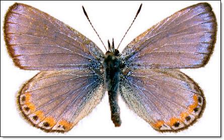 05 Butterfly