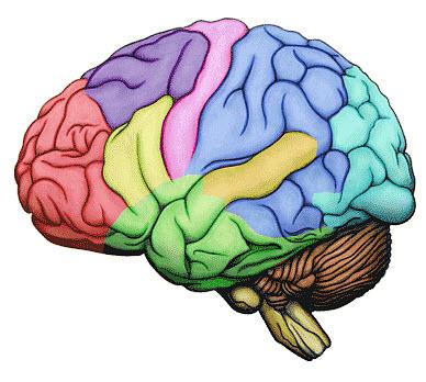 5-30 brain