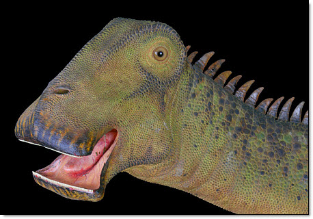 6-11 Nigersaurus