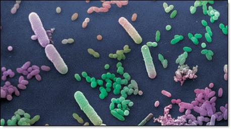 6-17 bacteria
