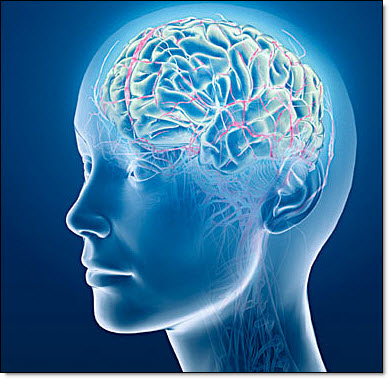 5-23 brain