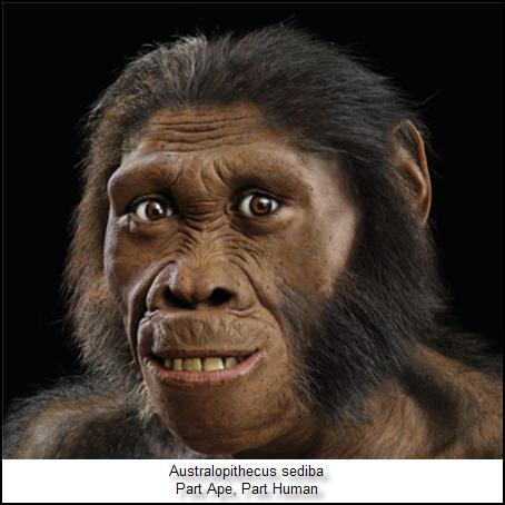 09 Australopithecus sediba