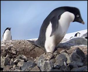 25 Criminal Penguins