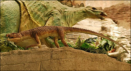 17 Housecat Croc photo