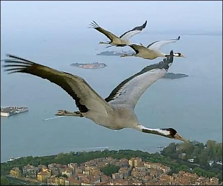 17 Cranes Fly Over Venice photo