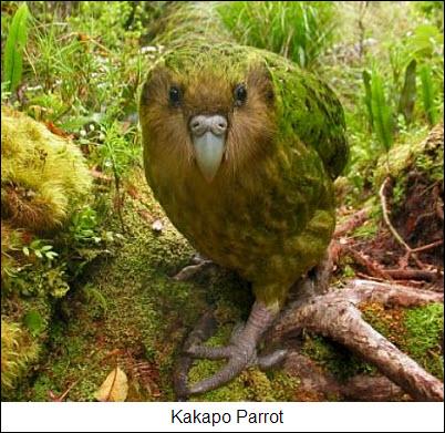 17 Parrots the Universe photo