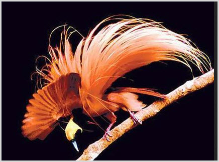 11 Birds-of-Paradise Projec photo