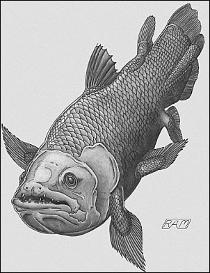 01-16 Coelacanth photo