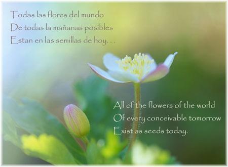todas_las_flores.jpg