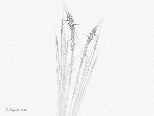 Star_grass