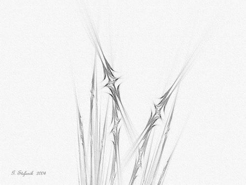 Star_grass_detail