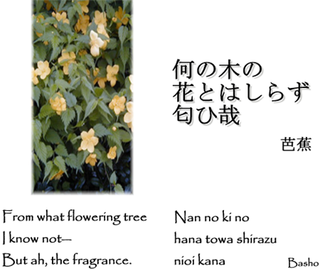From_what_flowering_tree