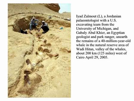Resize_of_whale_bones_in_the_sahara_2_2